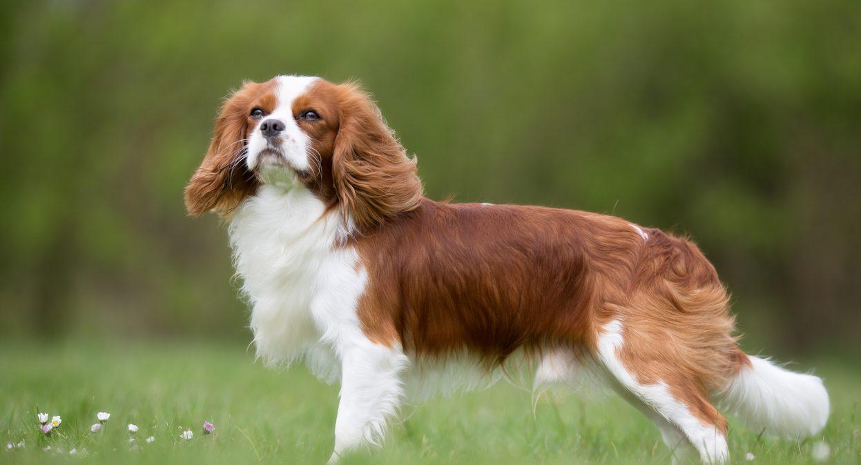Choosing a pet dog | Live Better