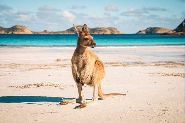 Travel Insurance Australia | Travel Insurance Online ...