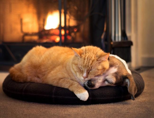 Pet Insurance Australia | Dog & Cat Insurance | Medibank